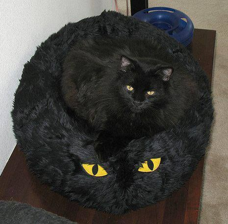 Black Cat Master Of Disguise