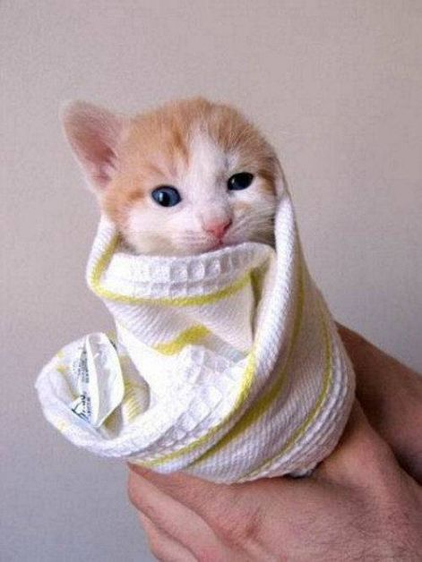 cat_wrapped_up_in_a_towel.jpg